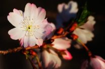 apple-tree-flower-fine-art-nature-photography-by-steve-perry-1363772665_b